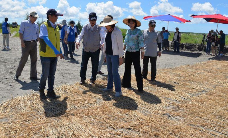 ▲濁水溪灘地鋪蓋稻草抑制揚塵。(圖/記者蘇榮泉攝,2020.06.16)