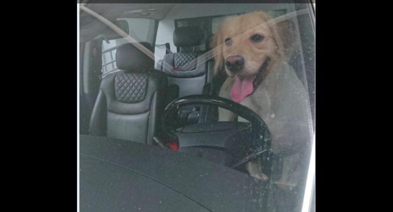 飼主注意!夏季悶熱獨留<b>犬</b>、貓車內 動保處首度開罰兩千