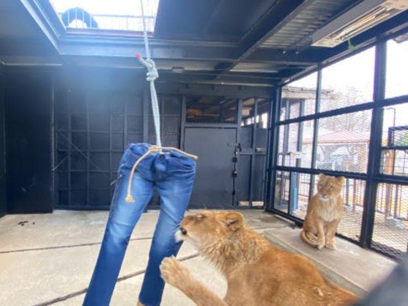 肉肉自己賺!日本動物園回禮超有創意 網暴動募資瞬間達標