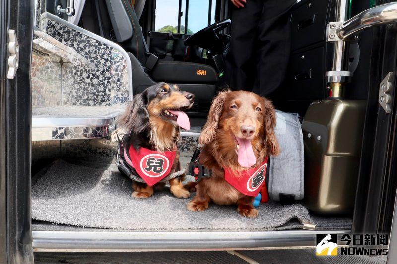 ▲交通工具選擇寵物友善巴士,旅途中也會準備寵物用安全帶,確保安全。(圖/記者陳致宇攝)