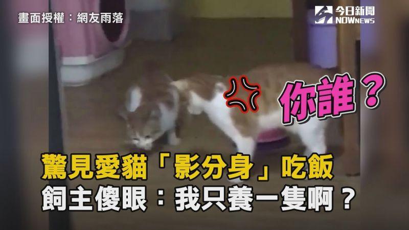 影/開門驚見愛貓「影分身」吃飯 飼主傻眼:我只養一隻啊?