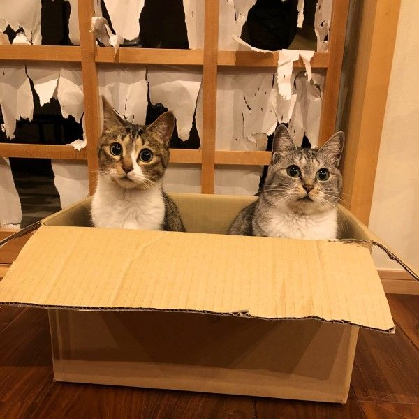 ▲推主家養了幾隻貓咪,一看就知道這些貓咪不屬於「溫和聽話」派的(圖/twitter@kokonananya)