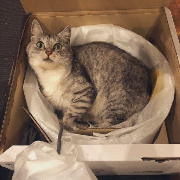 ▲貓咪:耶~奴才買了新貓窩!(圖/twitter@kokonananya)