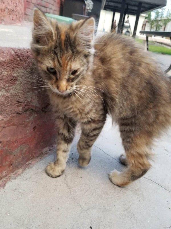 ▲柯特妮在停車場發現一隻瘦弱的小病貓(圖/IG@torbiereese)