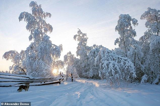 熱爆!俄西伯利亞驚見異常高溫 「北極圈小鎮」竟飆38度