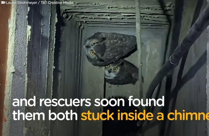 ▲兩隻貓頭鷹受困在煙囪裡。(圖/Facebook@The