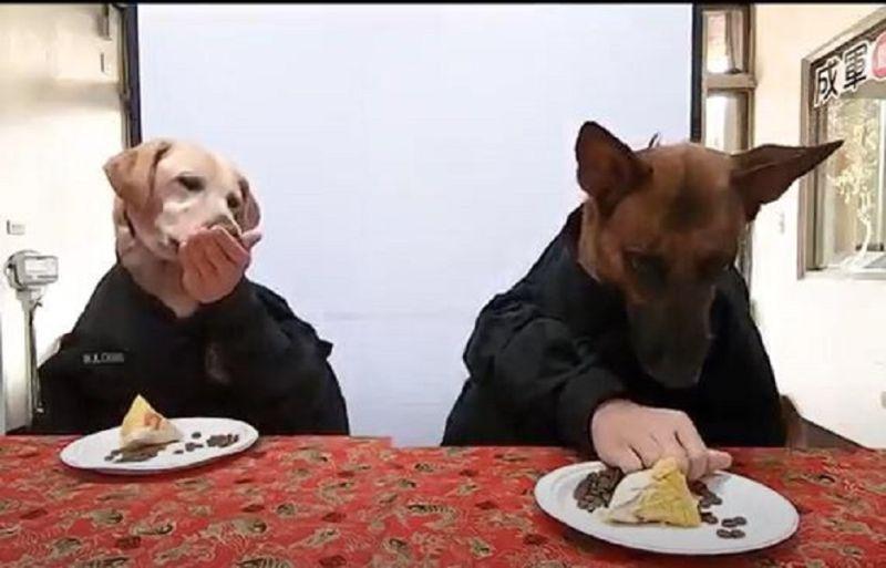 ▲台中市警察局警犬隊將狗食做成粽子犒賞警犬,並拍成搞笑影片分享。(圖/ 記者鄧力軍翻攝)
