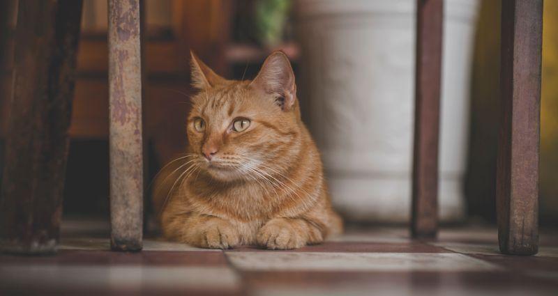 曬貓可讓<b>交友</b>成功率大增?專家曝「殘酷真相」:全搞錯了