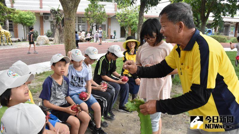 ▲社區紅龍果種植達人蔣來祥阿公,到學校親自教導小朋友從搭設棚架開始。(圖/記者陳雅芳攝,2020.06.24)