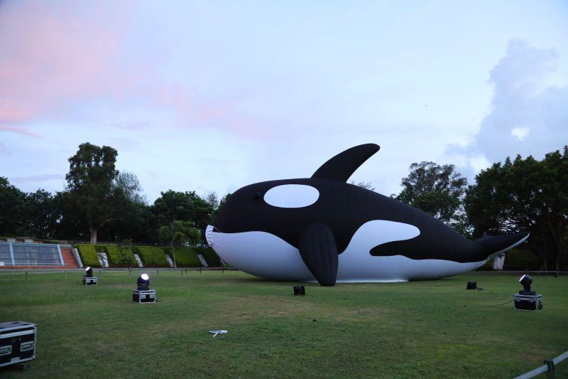 ▲「安平虎鯨Orca」。(圖/台南市政府提供)