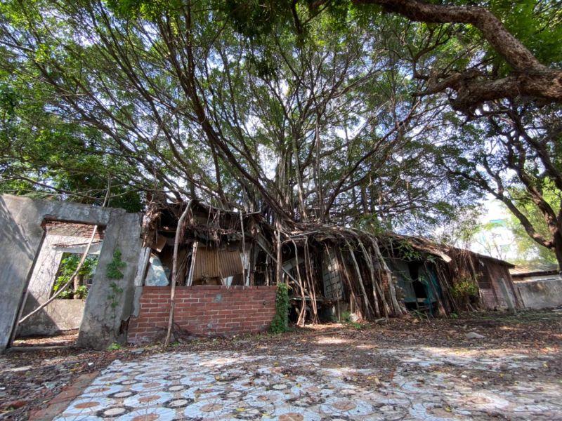 「樹包屋」台中刑務所官舍 讓歷史與自然共生