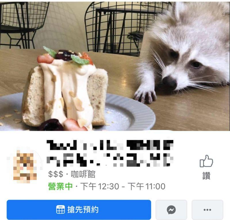 ▲網友踢爆台北知名咖啡店虐待浣熊。(圖/翻攝自當事者臉書)