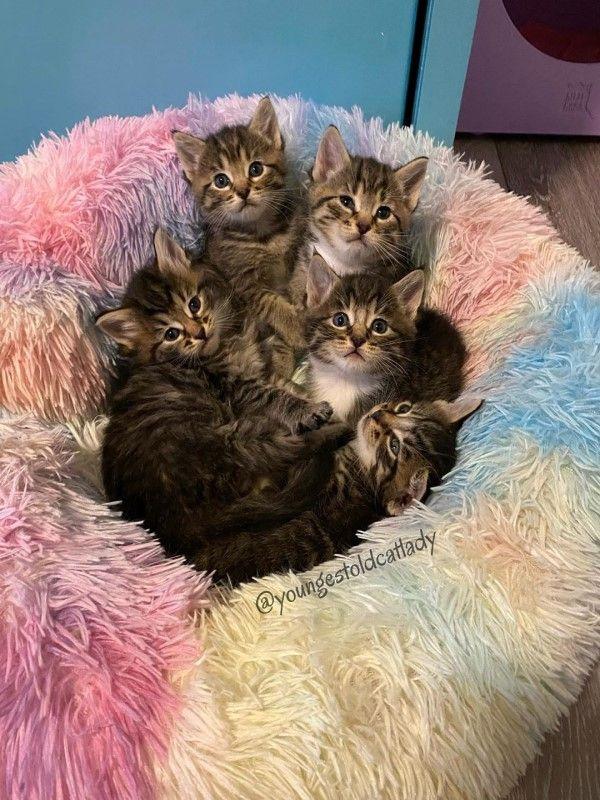 ▲而五隻小貓們也陸續找到新家,一家六口可以過幸福的日子了!(圖/IG@youngestoldcatlady)