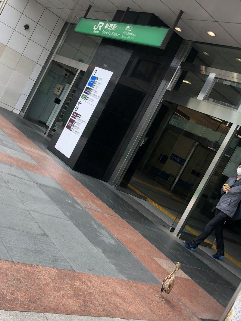 ▲新宿車站的東側出口,在5月15日被推主發現一隻神秘的鳥兒。(圖/Twitter@rukikikikiki)