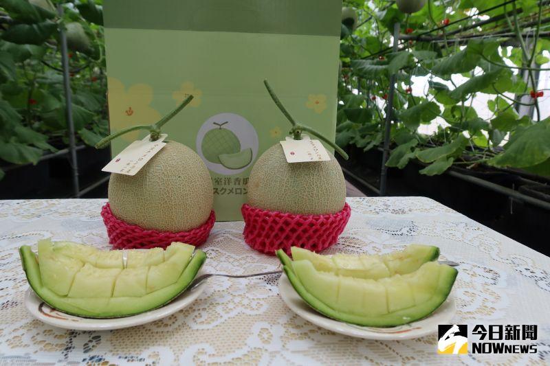影/送禮珍寶 台南13號洋香瓜媲美日本網式洋香瓜