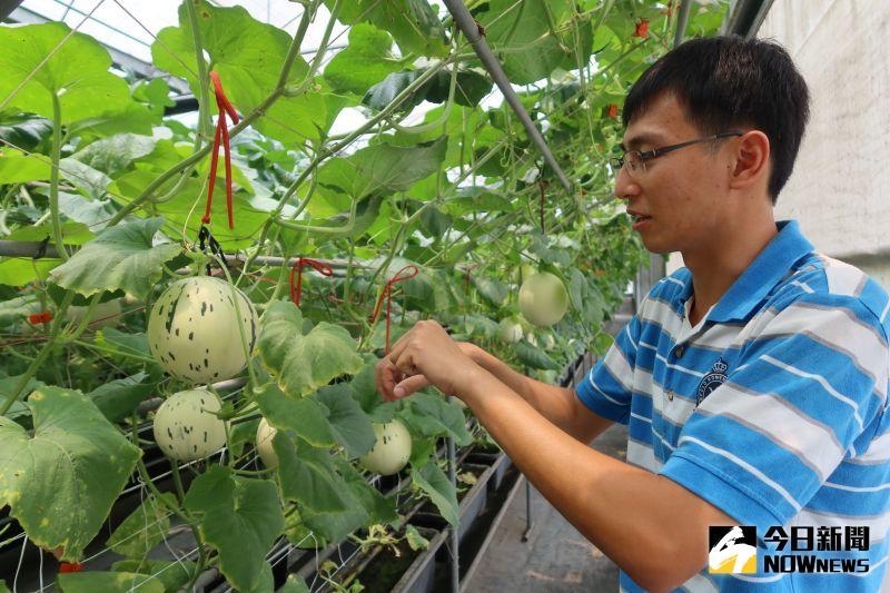 ▲陳照委兩年前返鄉務農,上網看遍國內農產品,認為溫室洋香瓜是高經濟作物。(圖/記者陳雅芳攝,2020.06.29)