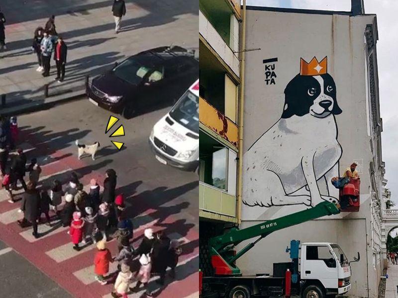 暖心<b>浪犬</b>每天自主護送幼兒們過馬路 獲獎成為當地明星!
