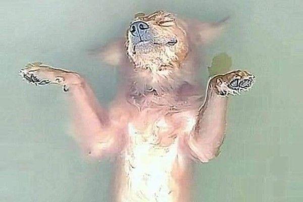 ▲沒想到才一天的時間就天人永隔,喬巴就好像睡著一樣一動也不動地漂浮在水上……(圖/FB@Thanh