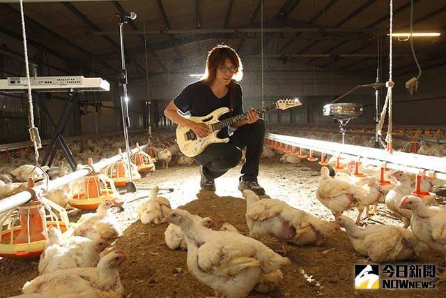 搖滾精神+IT魂養出搖滾雞 兩隻雞腿熬雞湯元氣爆表
