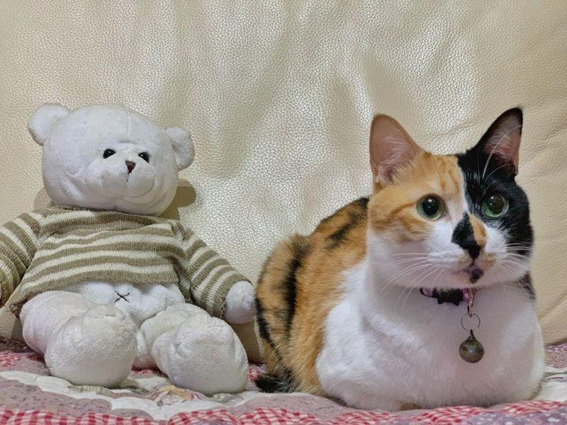 三花貓眼鼻花色完全對稱 還愛吃青菜網笑:太奇特!