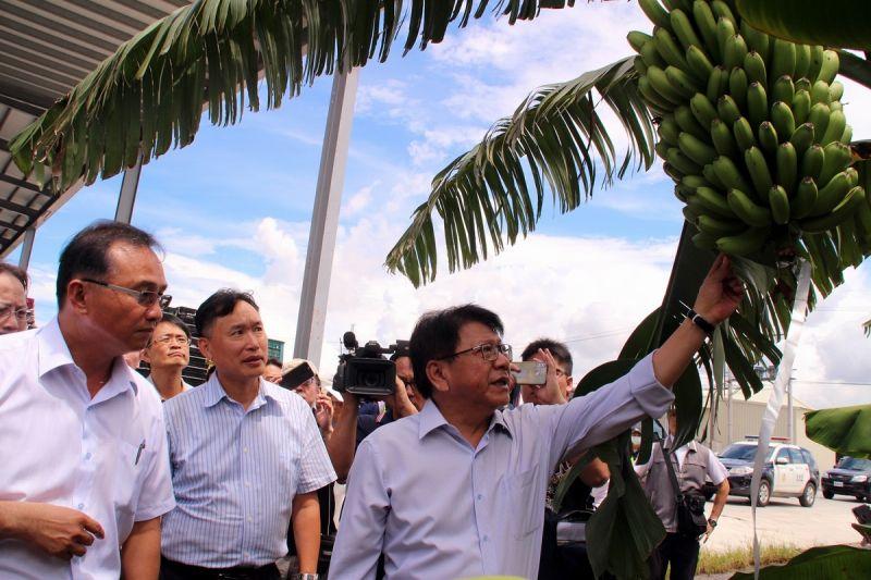 ▲屏東縣長潘孟安帶領蕉農藉由導入AI智慧科技讓農民轉型生產標準化,親自前往果園瞭解香蕉成長過程。(圖/屏東縣政府提供