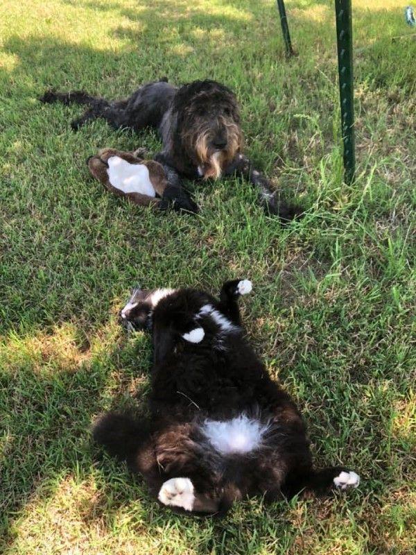 ▲牠還跟狗狗歐洛菈變成好朋友,經常一起曬太陽(圖/FB@Rachael