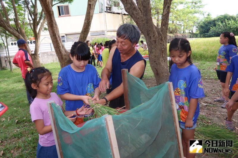 ▲學校退休工友楊伯伯搬出廢物利用組合而成的傳統打穀機,讓小朋友實地手打稻穗。(圖/記者陳雅芳攝,2020.07.07)