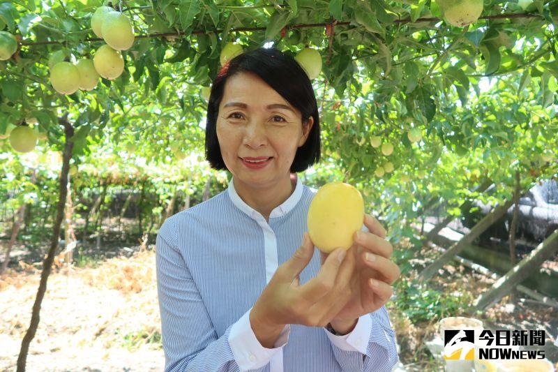 ▲溪湖鎮長黃瑞珠說,溪湖栽種黃金百香果的農民,目前只有陳存利。(圖/記者陳雅芳攝,2020.07.08)