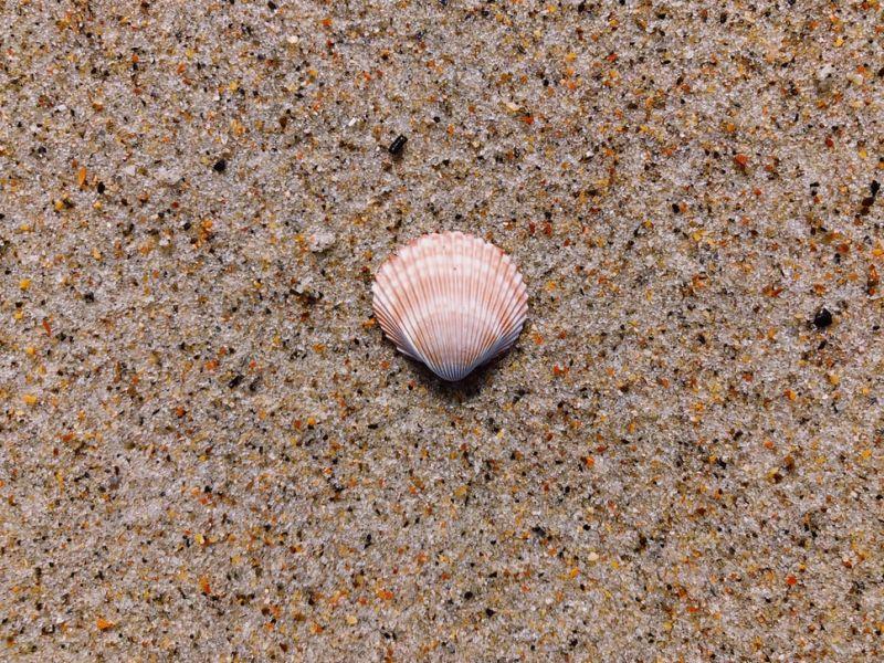 ▲最新研究發現,早在12萬年的史前人類,就會使用貝殼做項鍊當成飾品。(示意圖/翻攝自