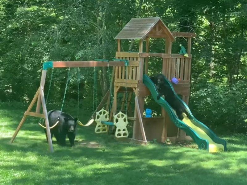 ▲熊媽媽:孩子們好好玩嘿,等等再玩一下就要回家囉~(圖/Youtube@Bret