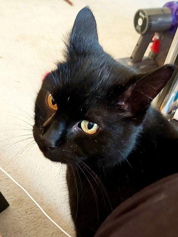▲漢娜表示那隻黑貓是鄰居家的貓咪,她都叫牠「奇普斯先生」,牠幾乎天天都來拜訪(圖/FB@Hannah