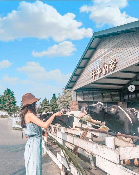 ▲千巧谷牛樂園牧場