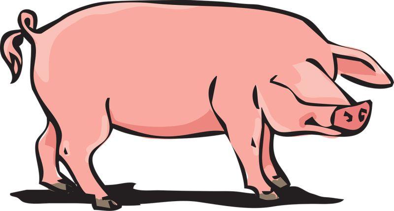 ▲即使三權分立,美國也曾出現「肉桶政治」。(圖/pixabay)