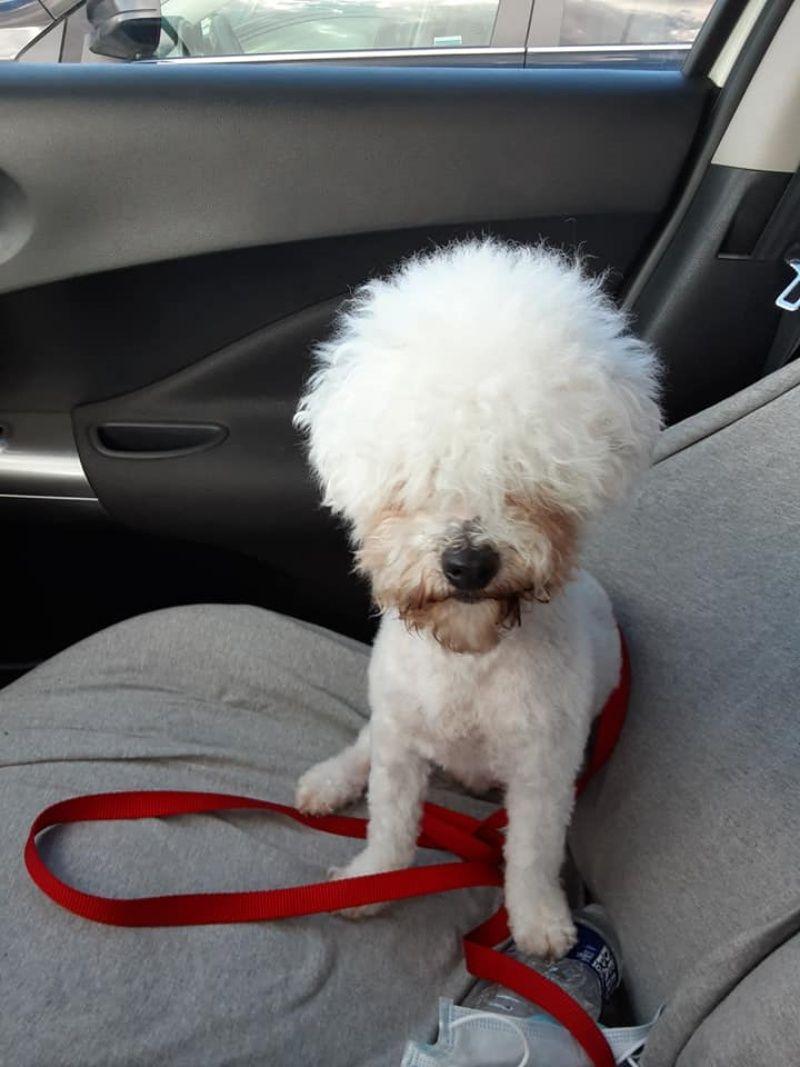 ▲切達對新造型非常有自信,彷彿自己是全世界最酷的狗狗。(圖/Facebook@Lisa