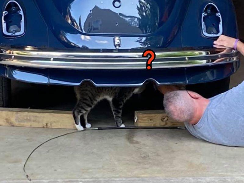 鄰居貓溜進女子家看丈夫修車:我來監工的啦!