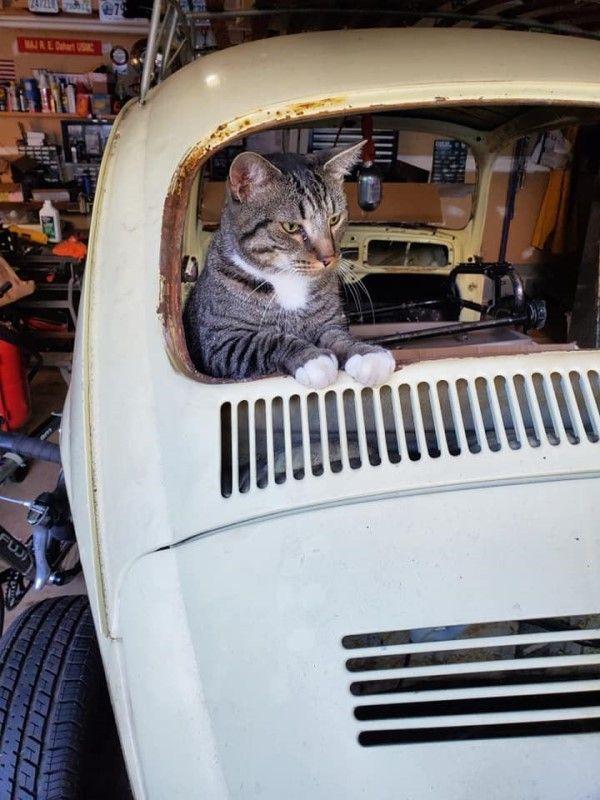 ▲艾咪的先生準備改造愛車時,克勞斯也跑來湊熱鬧(圖/FB@Amy