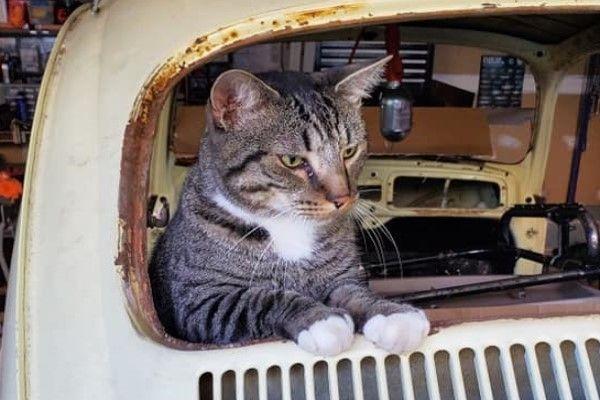 ▲克勞斯:沒有改造好車車,就不賞你罐罐喔!(圖/FB@Amy