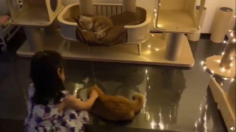 ▲豪華貓架。(圖/章子怡微博)