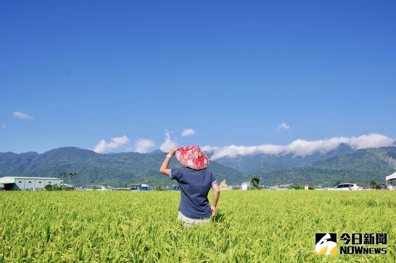 ▲旅客也可以戴上斗笠、拿起鐮刀,體驗農民割稻的辛苦。(圖/記者陳致宇攝)