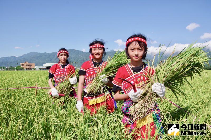 ▲花蓮縣玉里鎮是台灣單一行政區中最大的水稻生產區。(圖/記者陳致宇攝)
