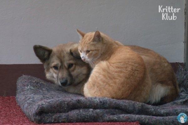 ▲小黃狗與橘貓總是窩在門口前的毯子上,互相取暖(圖/翻攝自Youtube@