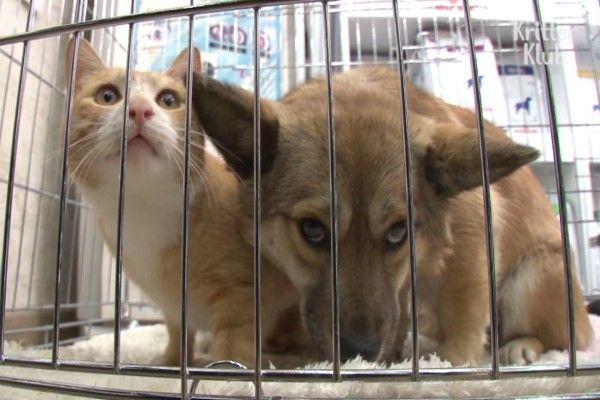 ▲最後在熱心居民的協助之下,終於捕捉到小黃狗,所幸牠們非常健康,馬上就可以送養,希望牠們很快就能一起找到新家人!(圖/翻攝自Youtube@