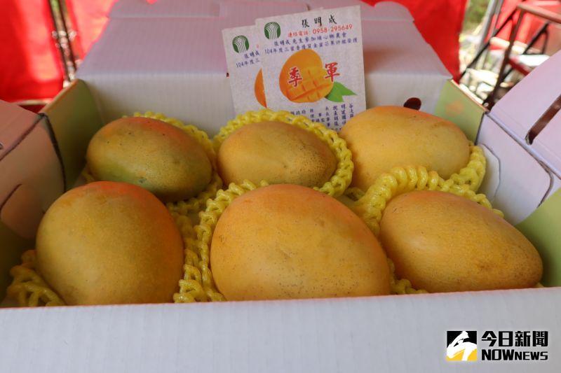 ▲埔心鄉金蜜芒果種植面積為45公頃,佔全台灣金蜜芒果產量的95%。(圖/記者陳雅芳攝,2020.07.18)
