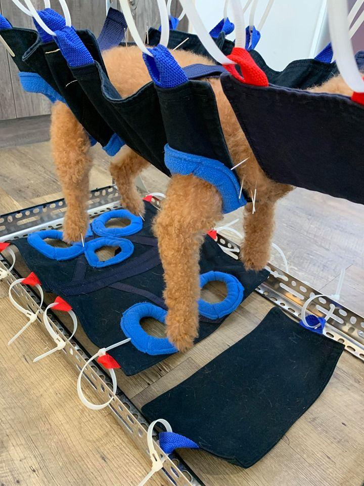▲網友的愛犬在醫院接受針灸治療,全身插滿銀針。(圖/讀者提供)