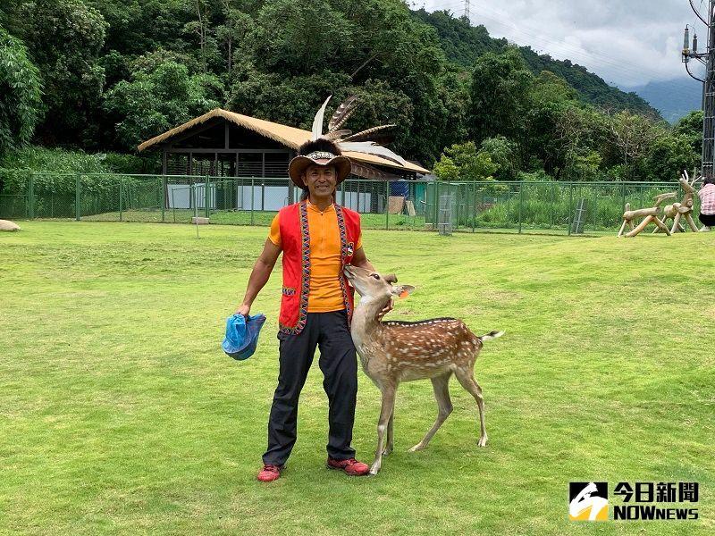 ▲鄒族的飼養員莊先生說,配戴上「黃色」耳掛的梅花鹿是深受馬前總統喜愛,而親自命名的「馬小九」。(圖/記者陳惲朋攝)