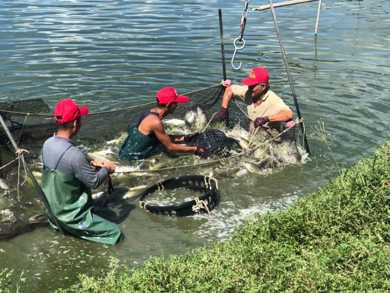 ▲家樂福和虱目魚業者合作,推有農銷履歷的嚴選虱目魚。