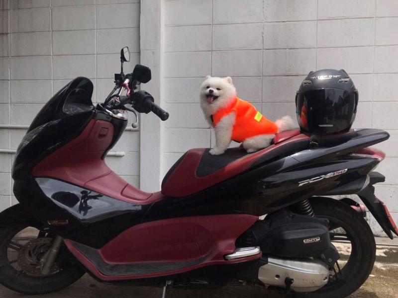 ▲當狗狗完成任務或累了,就會坐在摩托車上休息。(圖/翻攝自臉書)