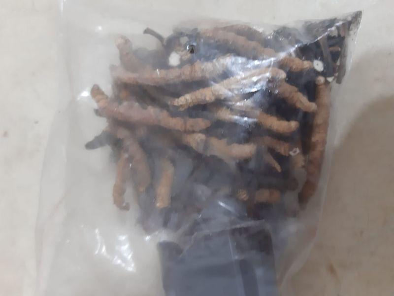 ▲貼文一出後,就有許多網友眼尖發現其實是昂貴的中藥材「冬蟲夏草」。(圖/翻攝爆怨公社臉書)