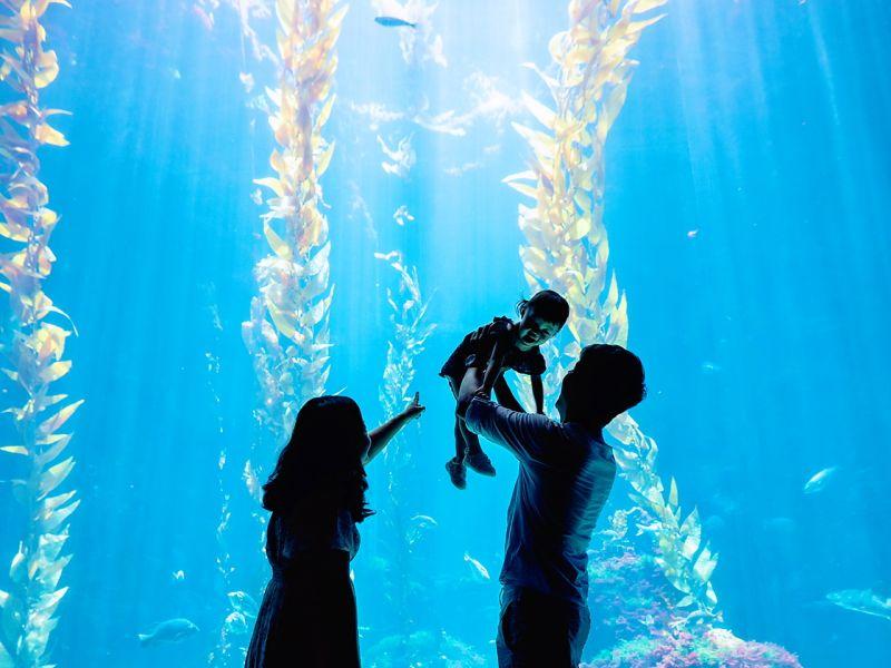 ▲海生館的夢幻打卡點「海藻森林」吸引不少年輕客群。(圖/屏東海生館提供)