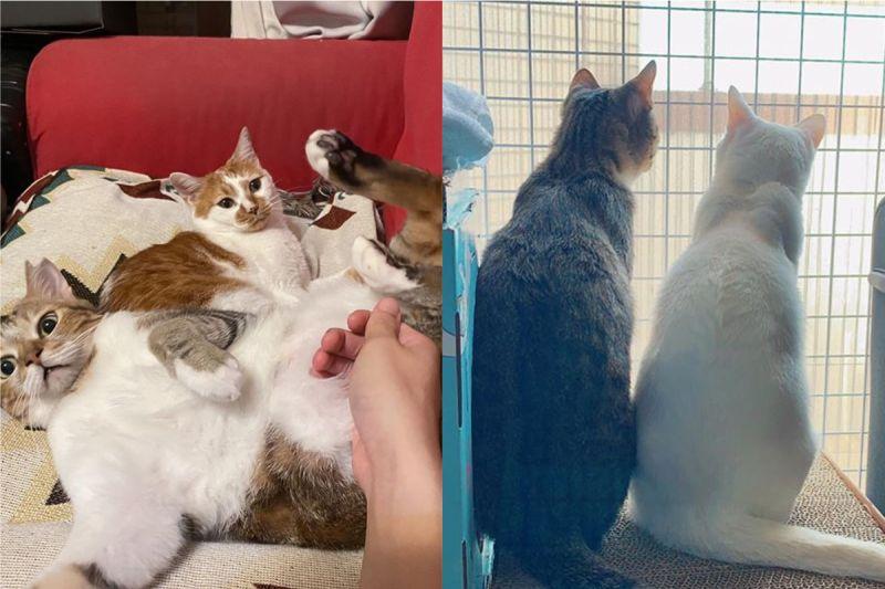 ▲吸貓吸起來!盤點超療癒的貓咪Youtube頻道。(圖/翻攝自ig:lamuncats、fb粉專:豆漿 - Soybean Milk)